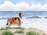 Rough Collie at the Beach