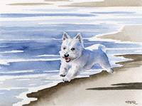 West Highland Terrier Beach 2