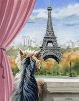 Yorkshire Terrier in Paris