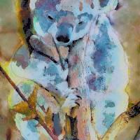 Koala by Lisa Rich