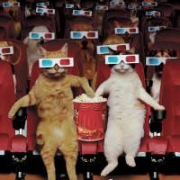 """""""PetMovie"""" by johnlund"""