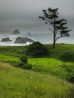 Ecola Beach Morning