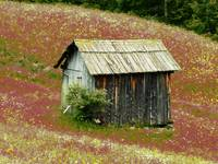 Small Dolomites Barn in Meadow
