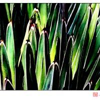 Yucca No. 1 Art Prints & Posters by Michelle Bush