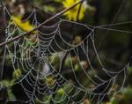 Galveston - Morning Web by Allen Sheffield