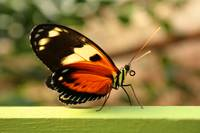 Orange Yellow and Black Butterfly