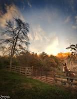 Horse in Stall Gladys Fork Road, NC by Joe Gemignani
