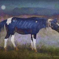 black horse at moonlight by r christopher vest