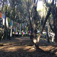 Prayer Flags and Redwoods