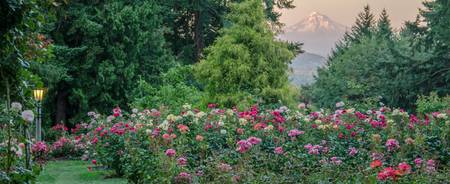 View From Portland's Rose Garden