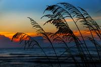 Beach Grass at Dawn