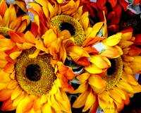 Expressive Digital Sunflowers Photo 001A