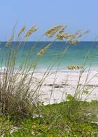 Beach through Sea Oats by Carol Groenen