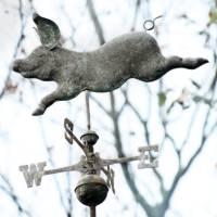 When Pigs Fly by Karen Adams
