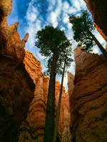 Bryce Canyon Perspective