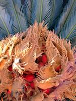 Hidden Fruits of the Palm Tree