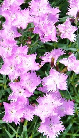 FloralVision II