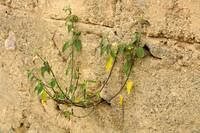 Branch in Concrete Wall