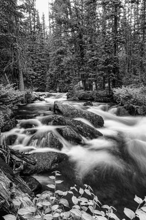 Black White Roosevelt National Forest Stream Portr