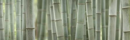 Grey Bamboo Scape