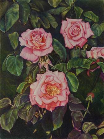 parks flower picture drawings 002 (three roses) by jeffrey arter
