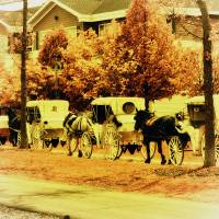 Carriage Ride by Lisa Rich