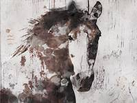 Gorgeous Horse Art