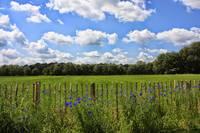 Blue Sky and Blue Flowers by Carol Groenen
