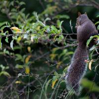 Squirrel Alone in Tree by Karen Adams