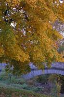 Fall Tree and Bridge