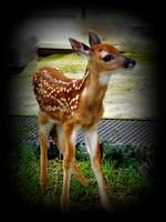 Little Buck_DSC0382-001