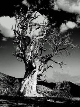 Spooky Tree Black Amp White Dscn0445 By Alan And Marcia Socolik
