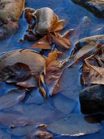 Leaves in Iridescent Water P1000740