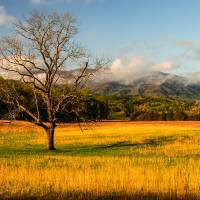 Lone Tree in Cades Cove Art Prints & Posters by Philip Ludwig