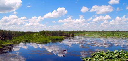 Skyscape Reflections Blue Cypress Marsh Florida C3