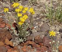 yellow wildflowers 1