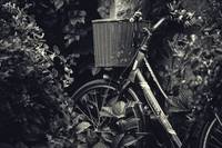 Bike in Foliage