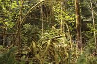 Rainforest Light by Carol Groenen