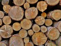 Background Of Logs