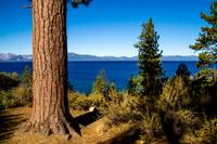 Tree Guarding Tahoe