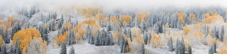 Frosted Hillside, Crested Butte, Colorado