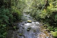 Clear Forest Stream by Carol Groenen