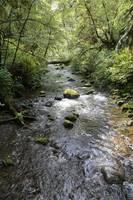 Rainforest River by Carol Groenen