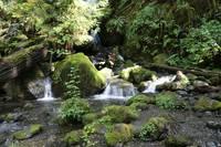 Mossy Rocks in the Rainforest by Carol Groenen