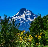Mt Hood with flowers
