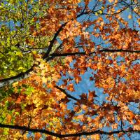 Fall Leaves by Lisa Rich