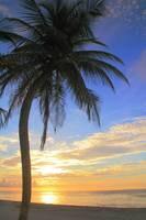 Palm Tree at Sunrise, Riviera Maya, Mexico