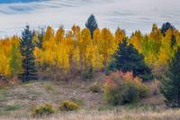 Autumn Season Aspen Grove Panorama Scenic View