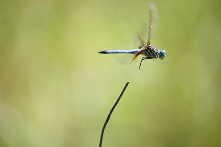 Dragonfly Liftoff