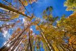 "Autumn Season Sunshine by James ""BO"" Insogna"